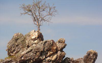 Resiliencia y Crecimiento Postraumático